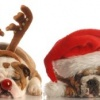 Community Dog Walk & Lunch – Sunday 02 December 2018