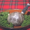 10th Annual Burns Supper – 21 January 2012
